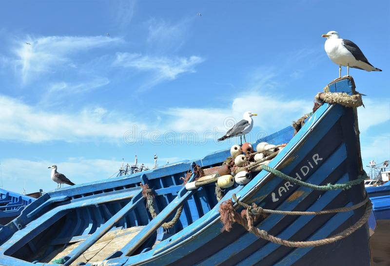 In the blue port of Essaouira royalty free stock photography