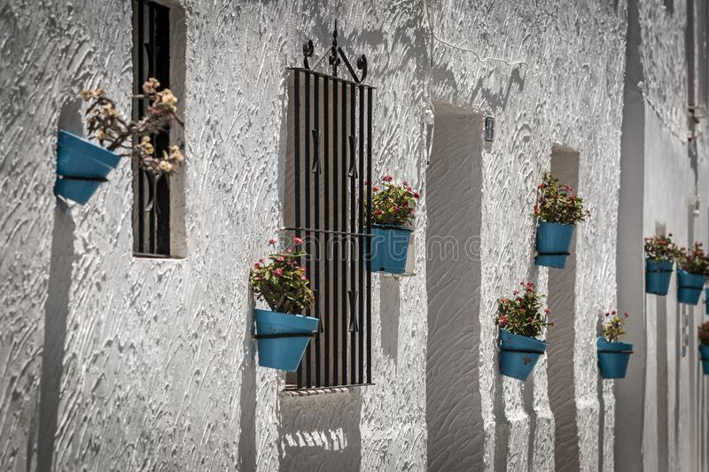 Potted flowers hanging near windows royalty free stock image