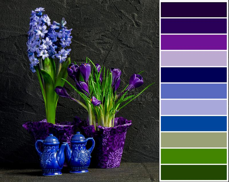 Blue and purple hyacinth and crocus still life royalty free stock photo