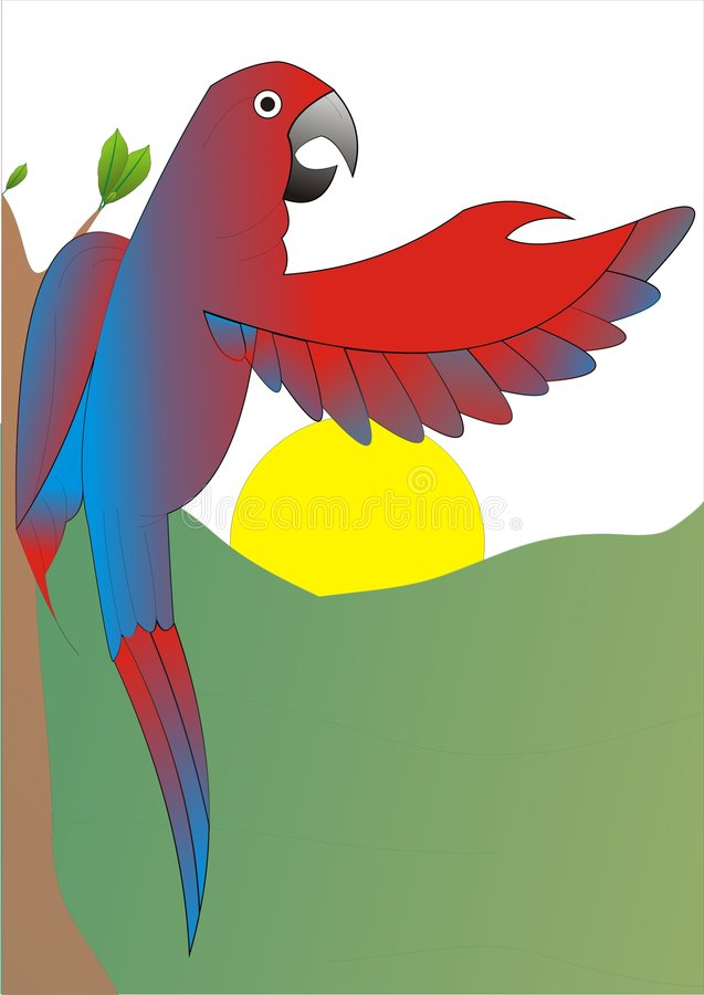 Blue Red Mccaw Parrot Macaw stock images