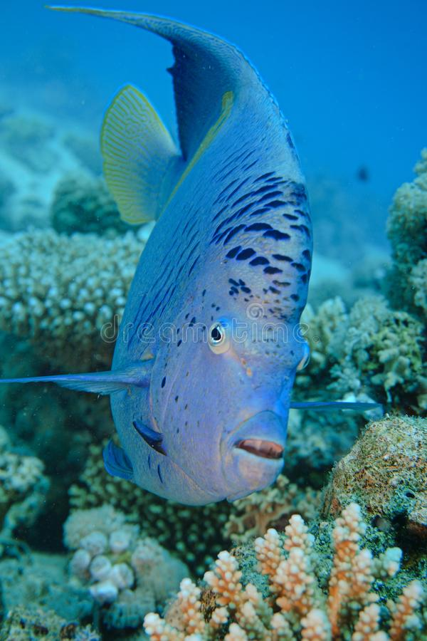 Blue red sea stock image
