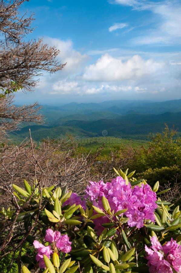 Blue Ridge Mountains royalty free stock images