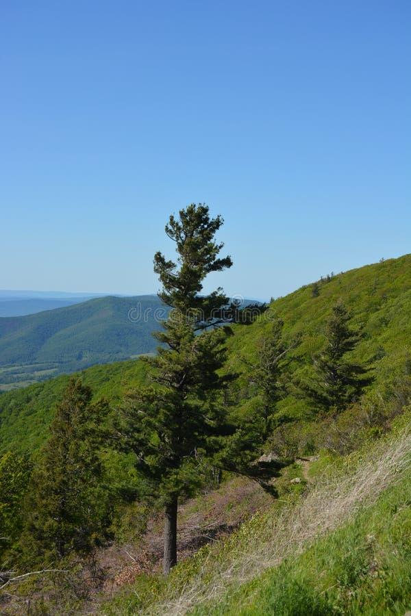 Blue Ridge Mountains w lecie obraz royalty free