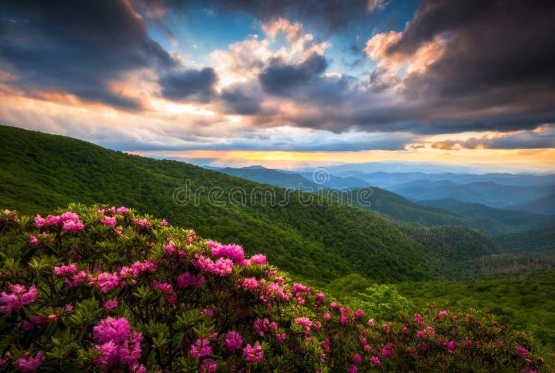 Blue Ridge Parkway Asheville North Carolina Scenic Summer Flowers Mountain Landscape Photography royalty free stock photos