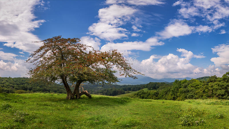 Blue ridge parkway, crabapple tree scenic. Beautiful skies over Grandfather Mountain from the Blue Ridge Parkway in North Carolina royalty free stock images
