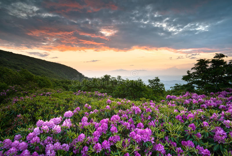 Blue Ridge Parkway Mountains Sunset Spring Flowers stock photography