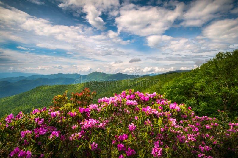 Blue Ridge Parkway North Carolina Mountain Spring Flowers Scenic Landscape Photography stock photography
