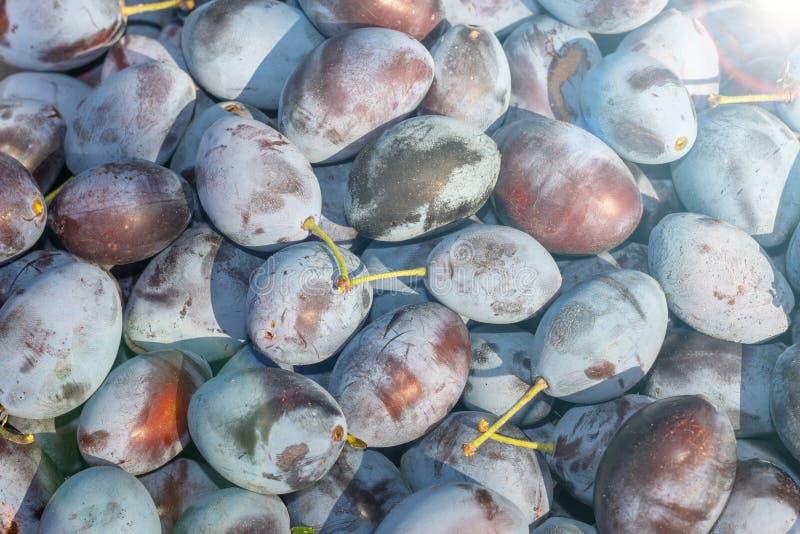 Blue ripe plum background texture. Macro photo. Harvest concept stock photo