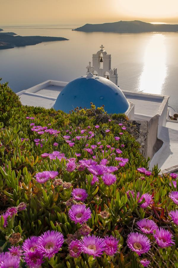 Blue-roofed church surrounded by flowers. There are many blue-roofed churches on Santorini Island, Greece, but the most famous is the Church of the Virgin Mary