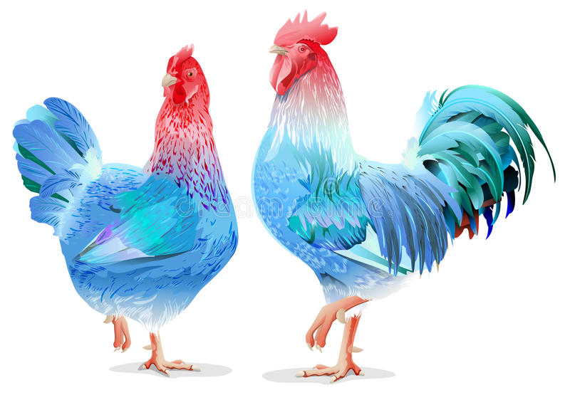 Blue Rooster and chicken female symbol 2017 by Chinese calendar royalty free stock images