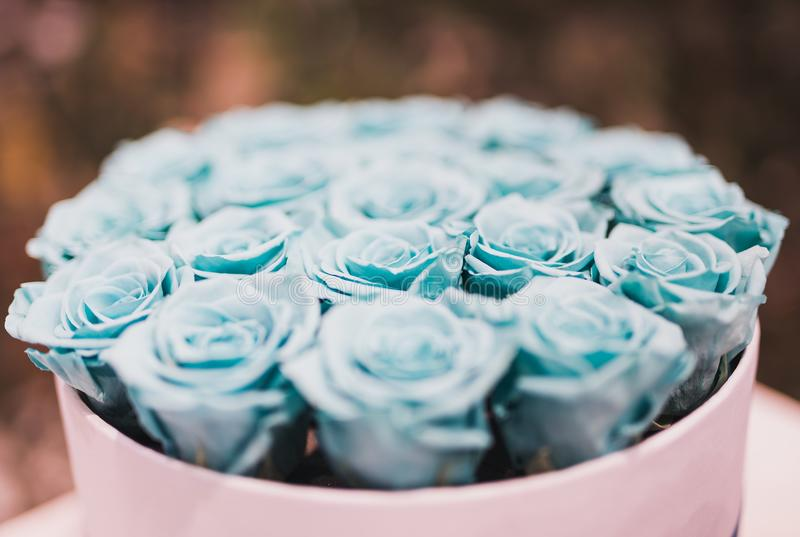 Blue Rose Bouquet Collections royalty free stock photos