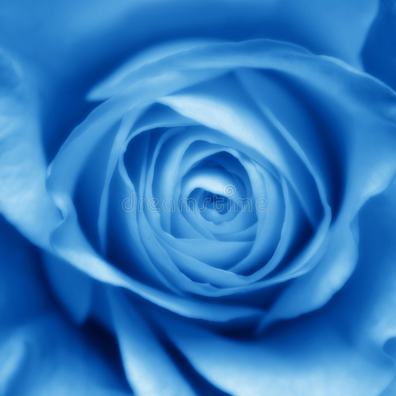 Blue Rose Bud. Soft blue toned rose bud, close up royalty free stock photos