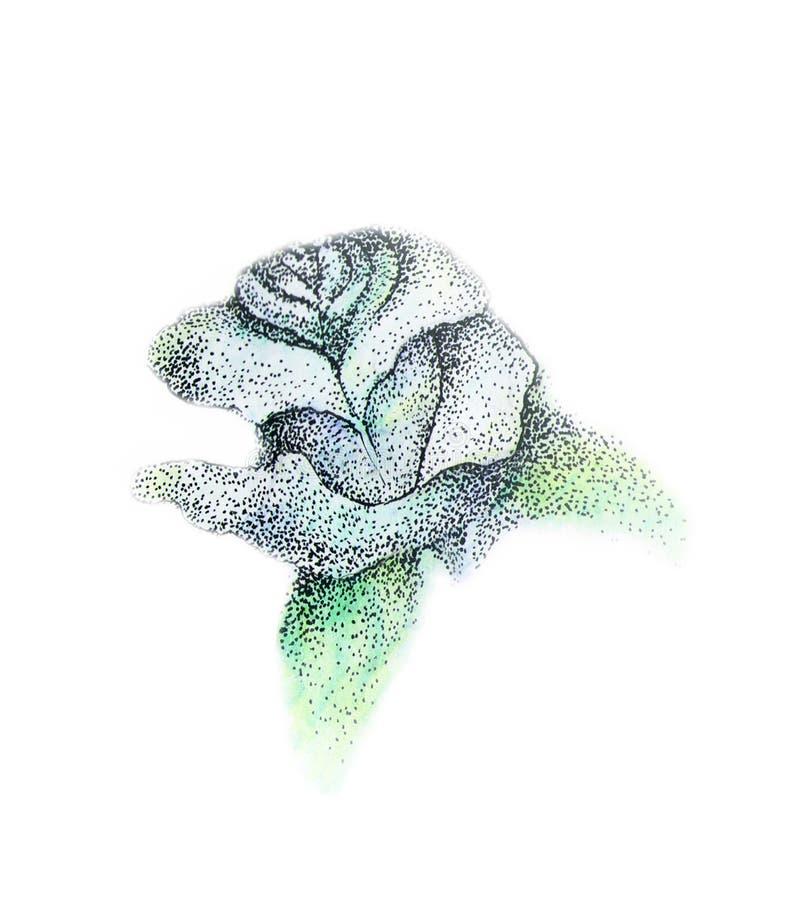 Blue rose stock illustration
