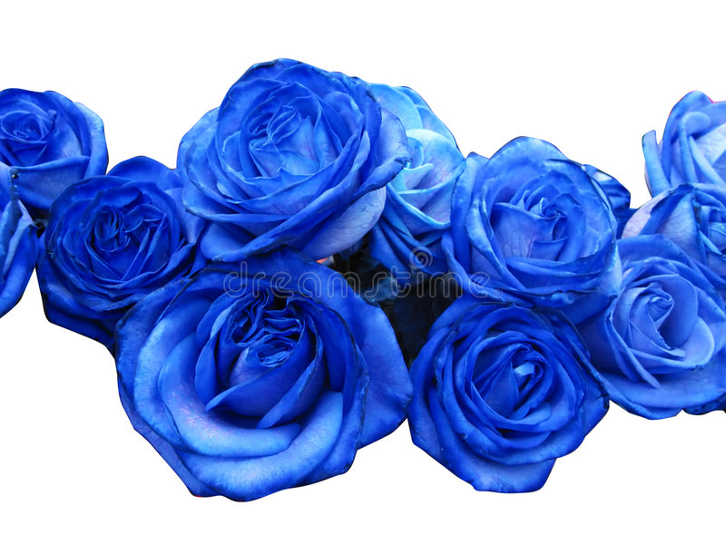 Download Blue Roses Stock Image - Image: 5511581