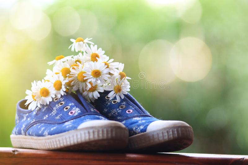 Blue running shoes filled with daisies under the summer sun stock images