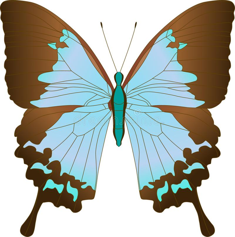 Blue Sailboat Ulysses butterfly Papilio Achillides ulysses. Vector illustration. stock illustration