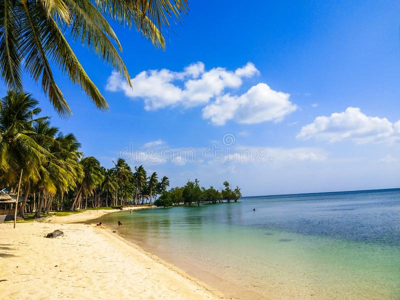 Blue sea and skies and coconut trees royalty free stock images