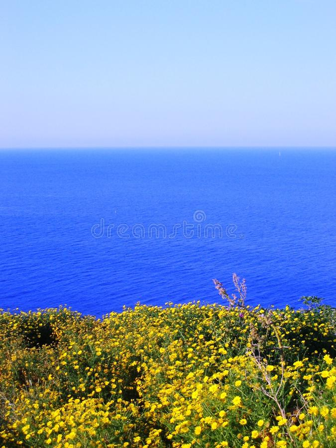 Blue sea and yellow flowers stock images