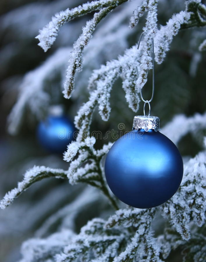 Blue seasonal baubles on frosted tree stock photography