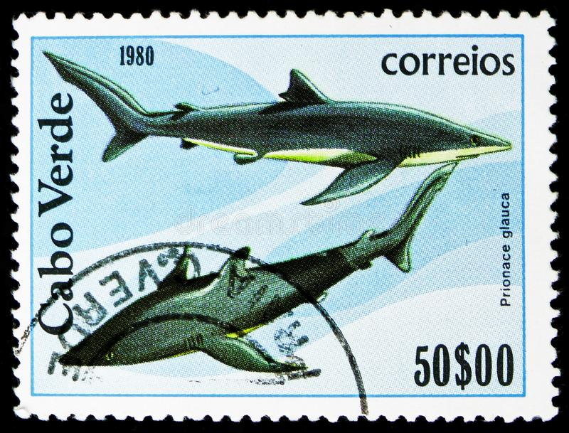 Blue Shark (Prionace glauca), Fishes serie, circa 1980 stock images