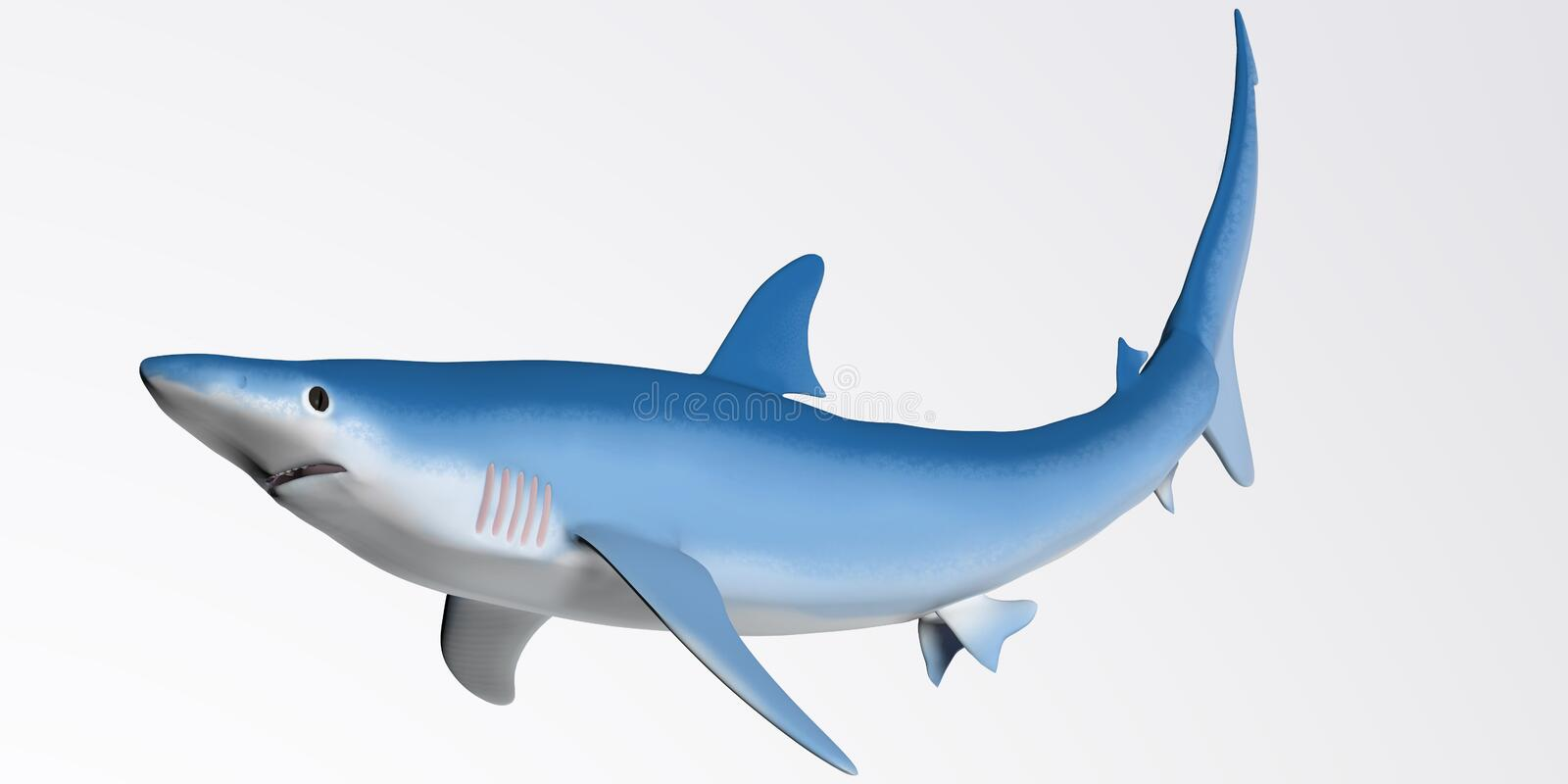 Blue Shark Profile. The Blue shark prefers cooler deep ocean waters and dines on squid and small fish royalty free illustration