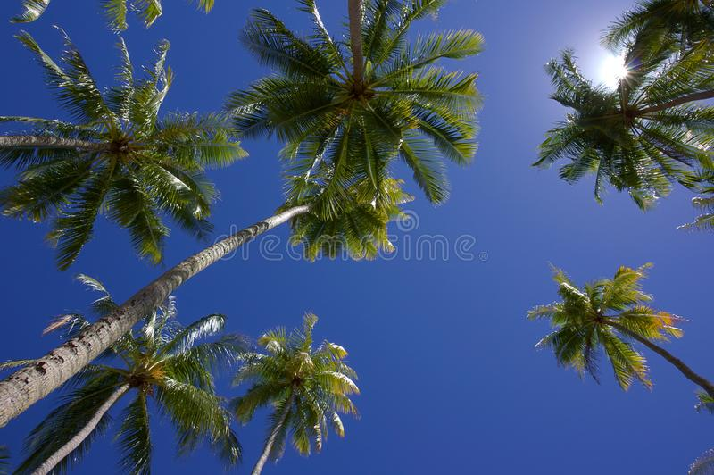 Blue skies above coconut trees royalty free stock photography