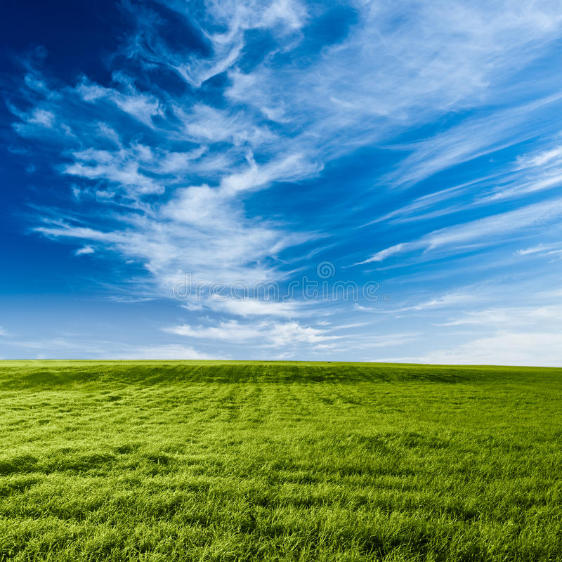 Blue skies above the green field stock photography