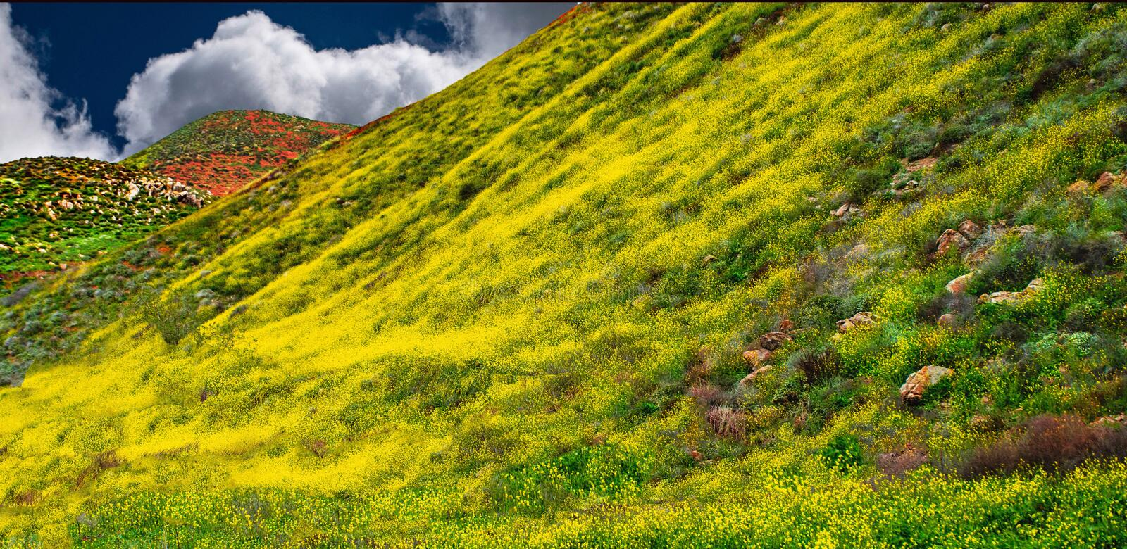 California Poppy fields landscape make a perfect picture of spring. royalty free stock images