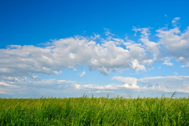 Blue skies green filed stock image