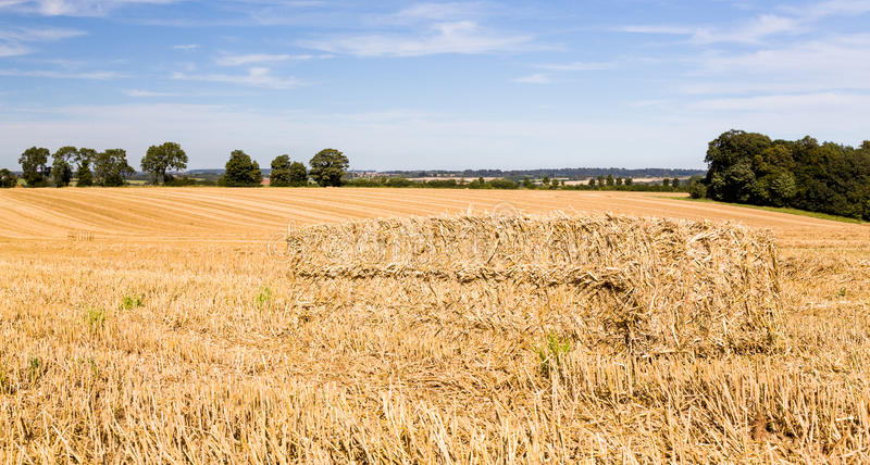 Download Blue Skies Over Corn Fields In England Stock Photo - Image: 26937102