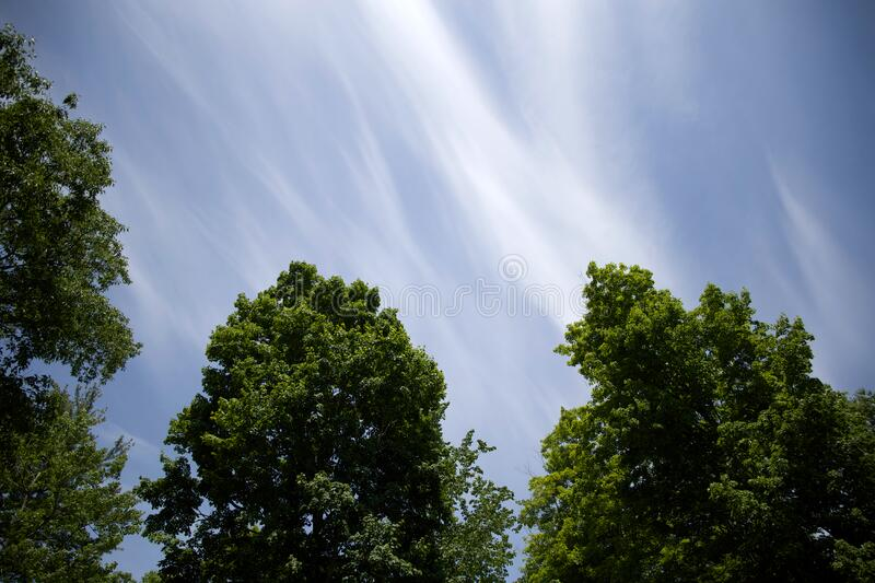 Blue skies over tree tops stock image