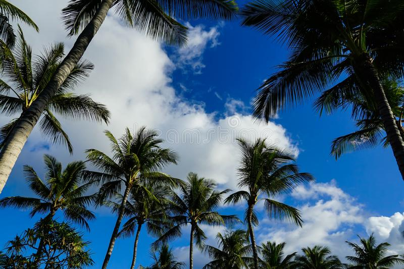 Blue skies and Palm trees stock images