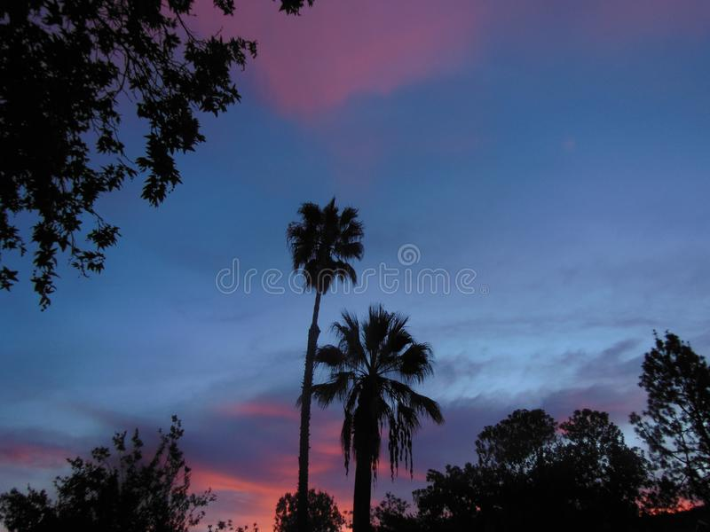Sunset with Palm Trees and Pink Clouds stock photo