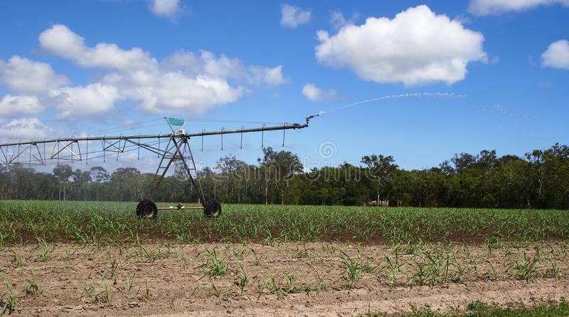 Irrigation sprinkler Australia. Blue skies and puffs of cloud over a very dry parched ground with the beginnings of plants growing. Irrigation devise sprinkles royalty free stock photography