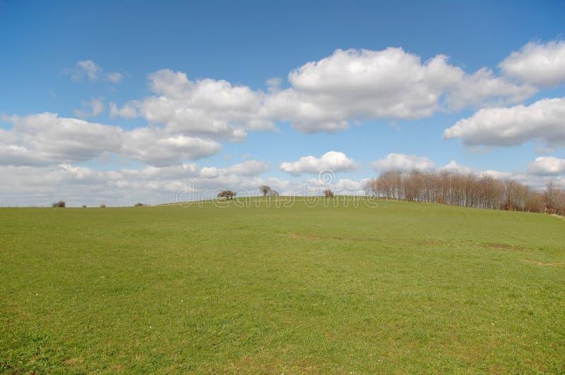 Blue sky. Green field with blue sky stock photos