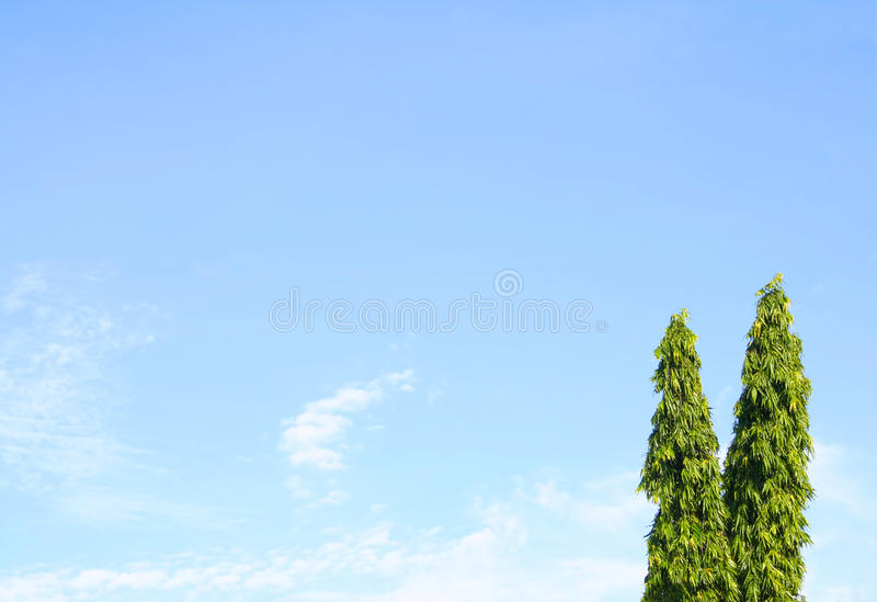 Blue sky with asoka trees stock image