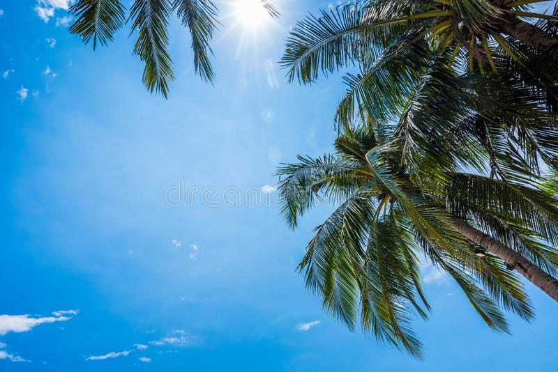 Blue sky background with coconut leaf and sun stock images