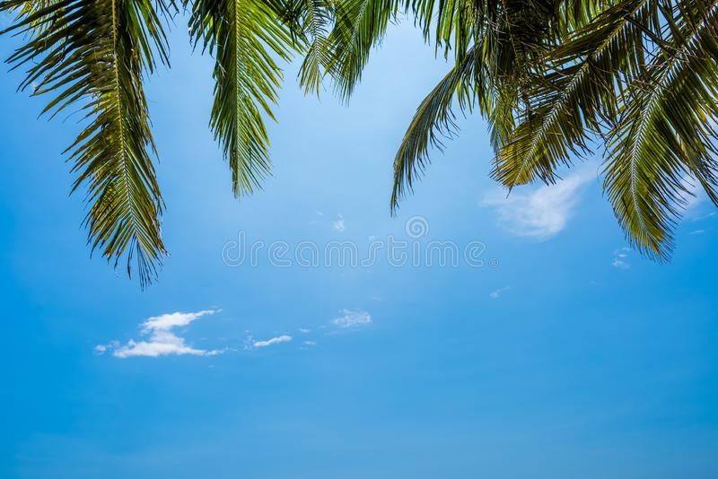 Blue sky background with coconut leaf and sun royalty free stock photography