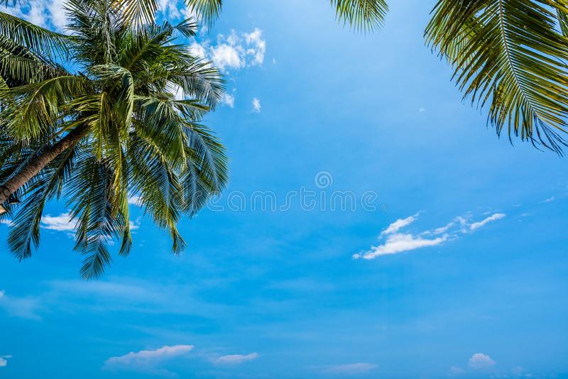 Blue sky background with coconut leaf and sun royalty free stock image