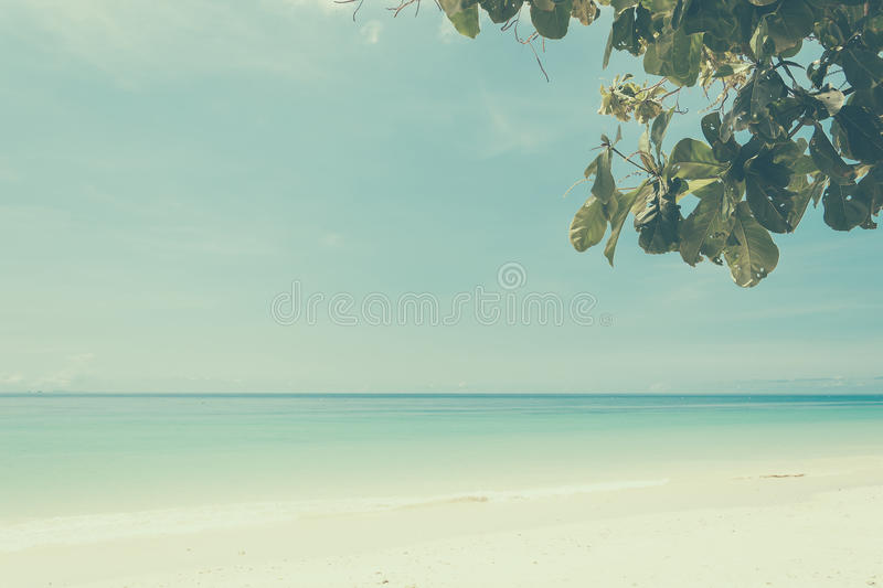 Blue sky with beach sea and leaf royalty free stock photography