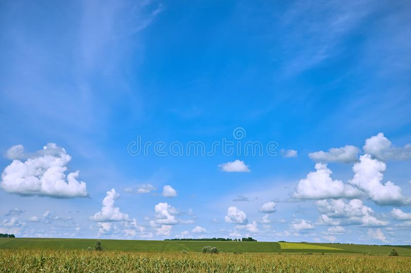 Blue sky and beautiful cloud with meadow tree. Plain landscape background for summer poster. The best view for holiday royalty free stock photo