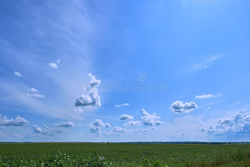 Blue sky and beautiful cloud with meadow tree. Plain landscape background for summer poster. The best view for holiday.  stock image