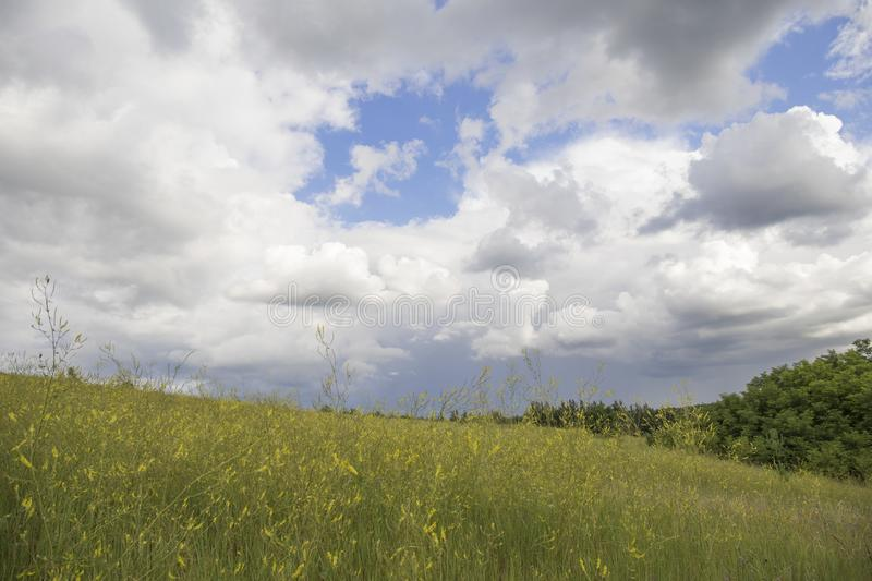 Blue sky and beautiful cloud with meadow tree. Plain landscape background for summer poster.  stock image