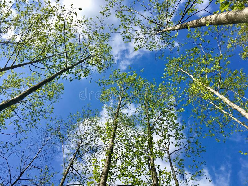 Blue sky. Beginning of May. Latvia stock image