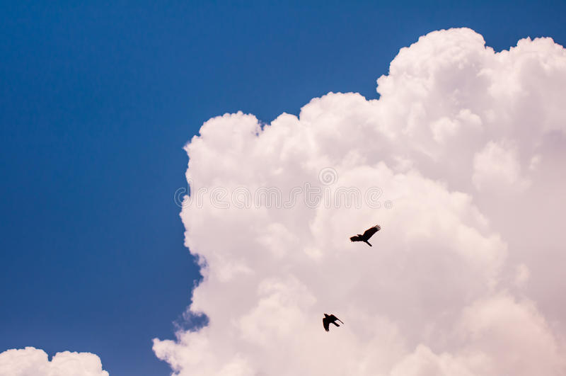 Blue sky with big fluffy white cloud and black birds royalty free stock photography