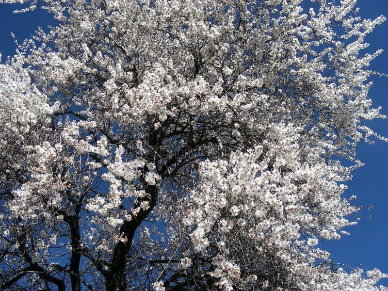 Blue, Sky, Blossom, Tree stock image