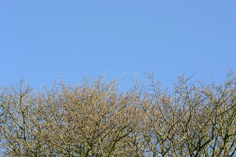 Blue sky with branches. Blue sky with no leaves branches bakcground royalty free stock photos