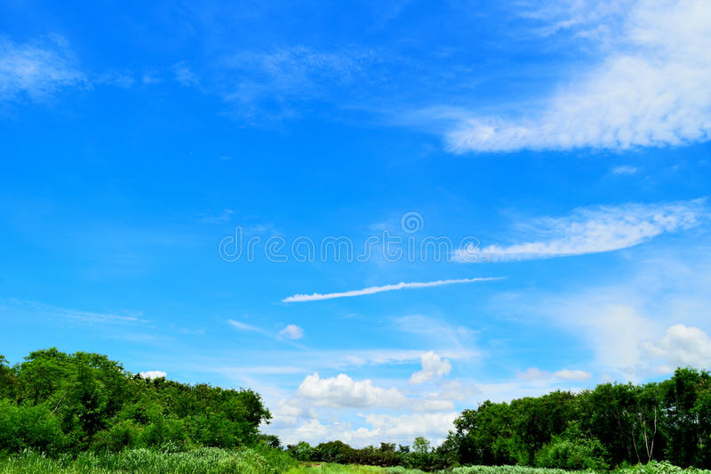 Blue sky and cloud with tree. stock photography