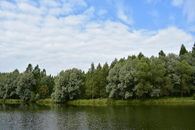 Blue sky clouds forest pond river lake, trees decorate the shore birch royalty free stock photography