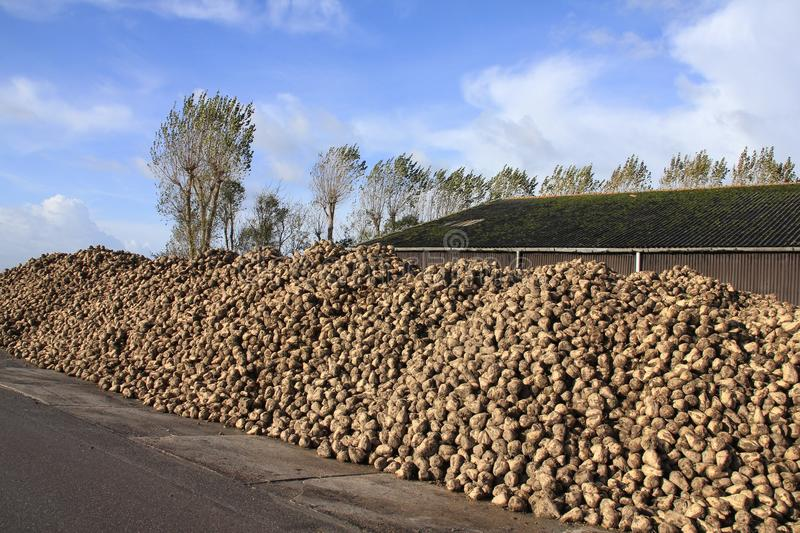 Blue sky with clouds and many sugar beets on a heap. stock photography